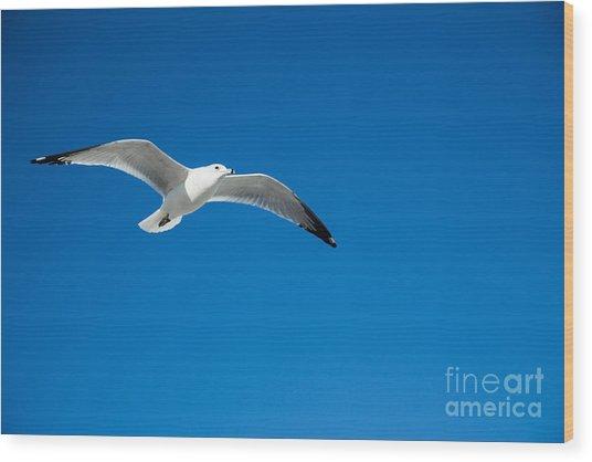 Seagull In Blue Skies Wood Print by Mina Isaac