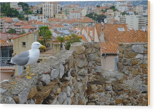 Seagull In Cannes Old City Wood Print