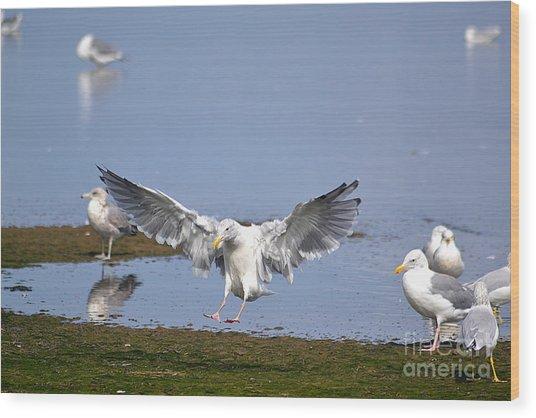 Seagull Landing Wood Print by Marsha Schorer