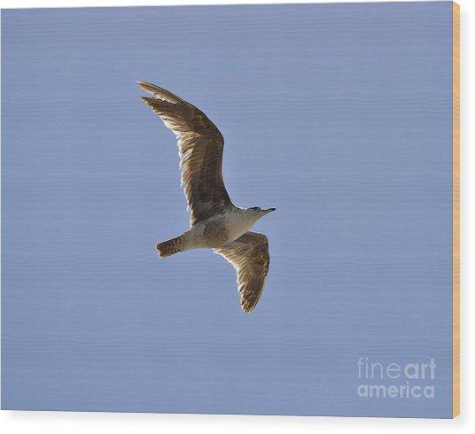 Seagull N Light  Wood Print