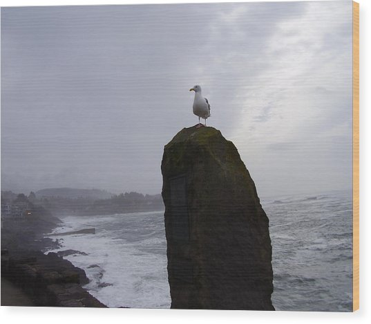 Seagull On A Boulder Wood Print by Yvette Pichette