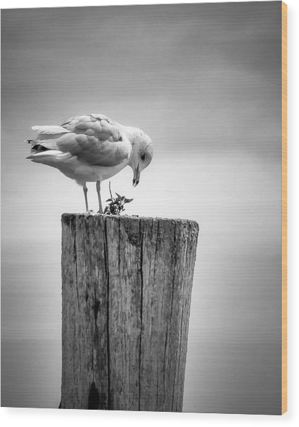 Seagull On Pier  Wood Print