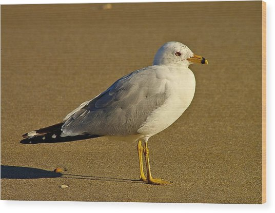 Seagull On The Beach Wood Print