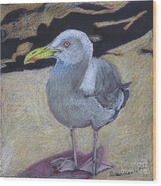 Seagull On The Rocks Wood Print by Susan Herbst