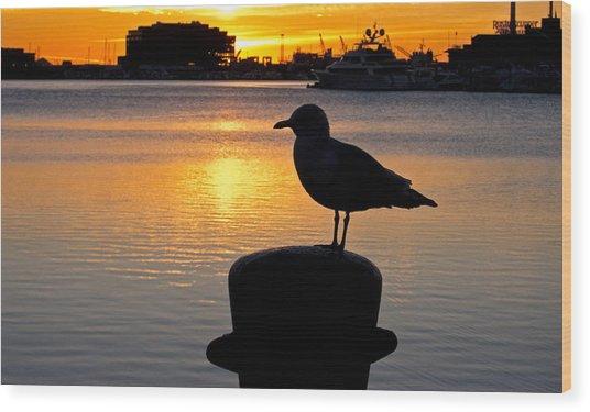 Seagull Silhouette Sunrise Wood Print
