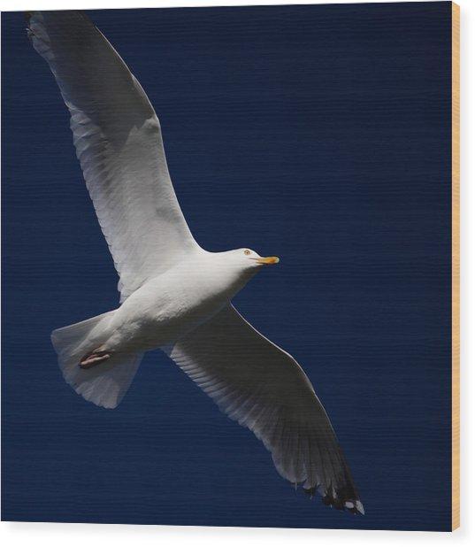 Seagull Underglow Wood Print