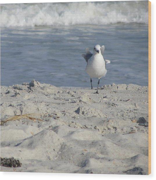 Seagulls At Fernandina 4 Wood Print