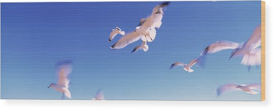 Seagulls Flying Along Route A1a Wood Print