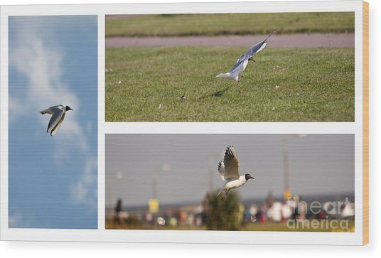 Seagulls Wood Print by Lesley Rigg