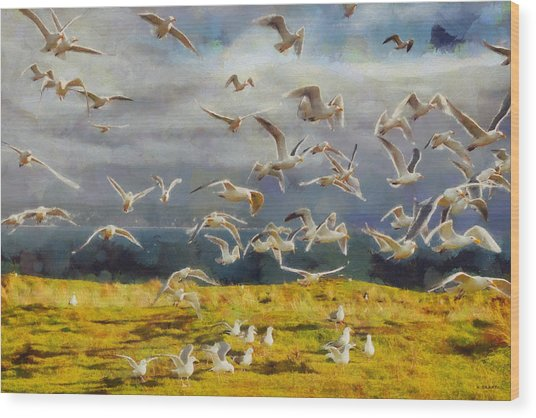 Seagulls Of Protection Island Wood Print