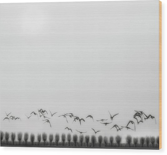 Seagulls Over The Fields Wood Print by Yvette Depaepe