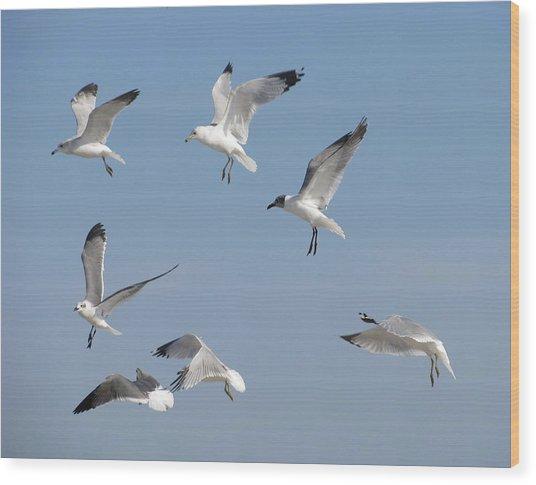 Seagulls See A Cracker Wood Print