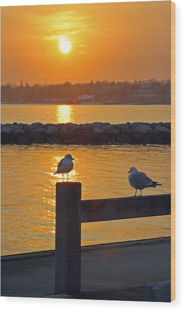 Seaguls At Sunset Wood Print