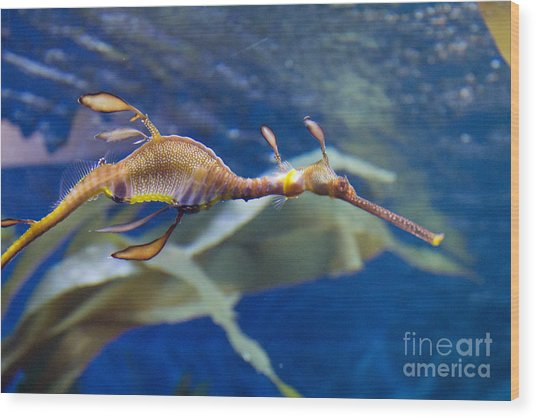 Seahorse See Horse Wood Print