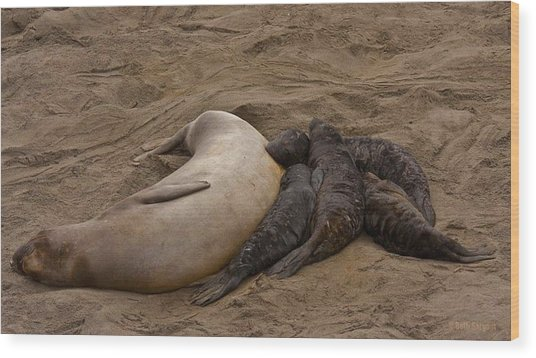 Seal And Pups Wood Print