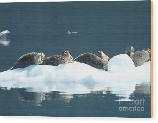 Seal Reflections Wood Print
