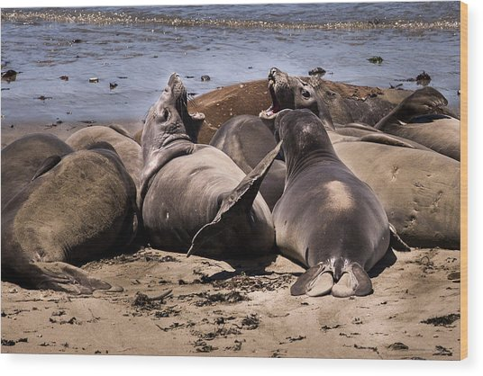 Seal Team 3 By Denise Dube Wood Print