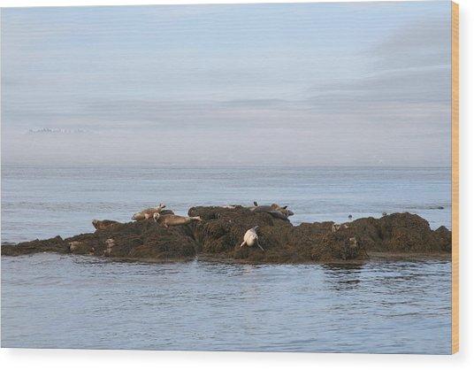 Seals On Island Wood Print by Carolyn Reinhart