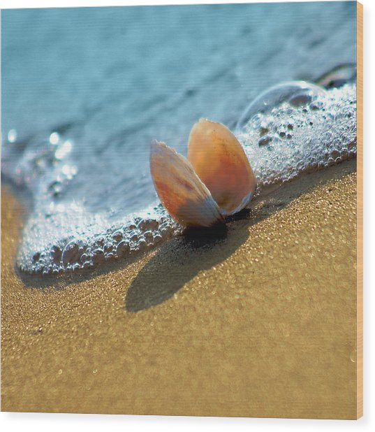 Seashell On The Coast With Wave And Bubble Wood Print