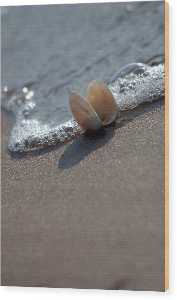 Seashell On The Coast With Wave Wood Print