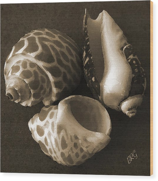 Seashells Spectacular No 1 Wood Print
