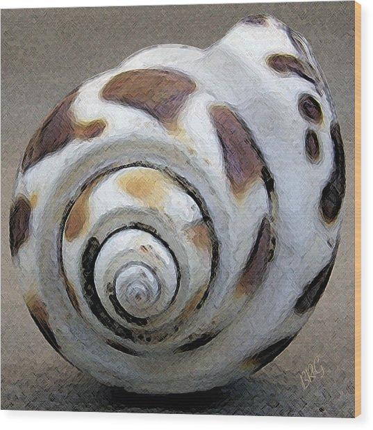 Seashells Spectacular No 2 Wood Print