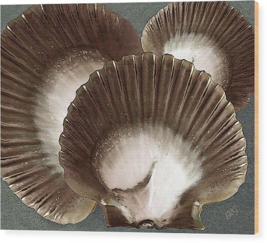 Seashells Spectacular No 22 Wood Print