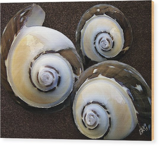 Seashells Spectacular No 23 Wood Print