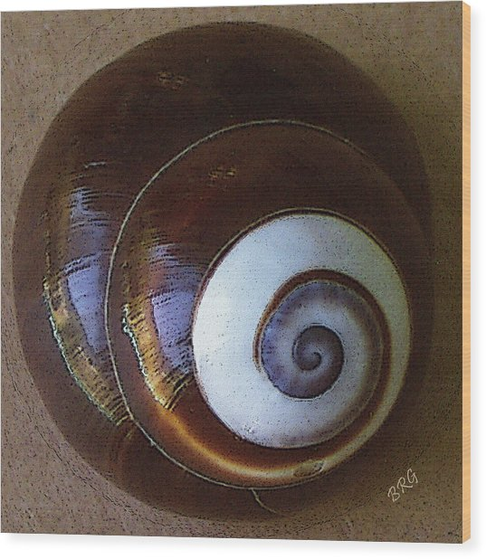 Seashells Spectacular No 26 Wood Print