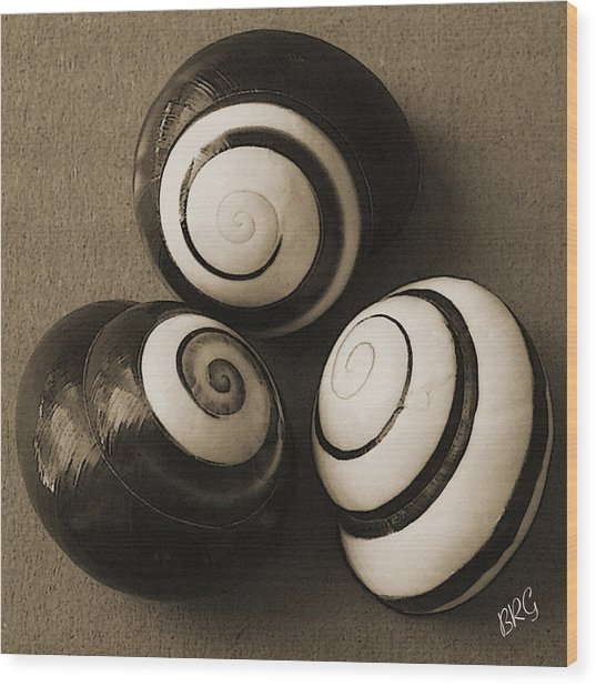 Seashells Spectacular No 28 Wood Print