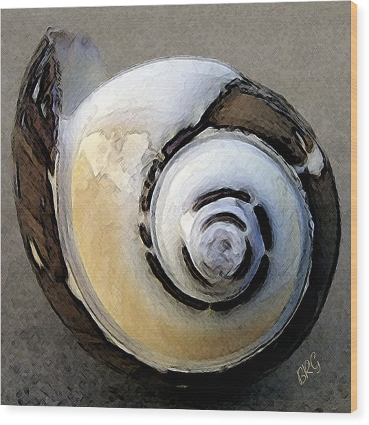Seashells Spectacular No 3 Wood Print