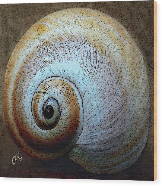 Seashells Spectacular No 36 Wood Print
