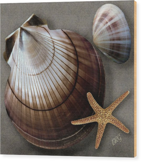 Seashells Spectacular No 38 Wood Print