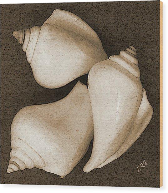 Seashells Spectacular No 4 Wood Print