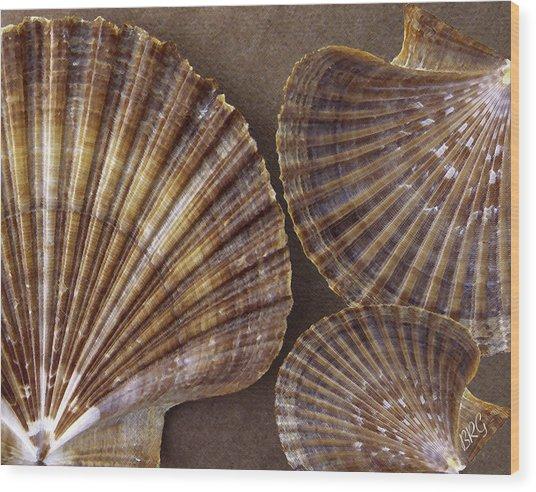 Seashells Spectacular No 7 Wood Print
