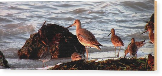 Seaside Diner Wood Print by Will Boutin Photos