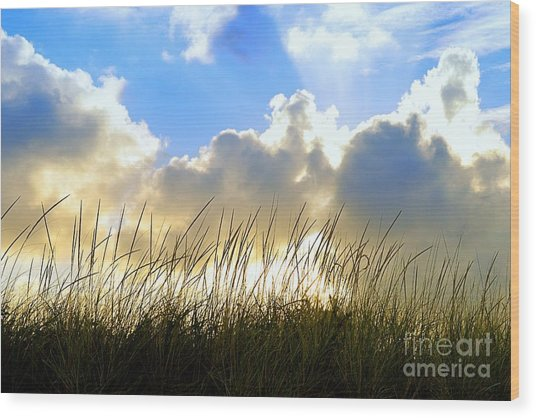 Seaside Grass And Clouds Wood Print