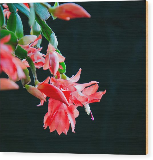 Seasonal Bloom Wood Print