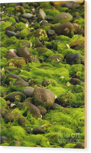 Seaweed And Rocks 2 Wood Print