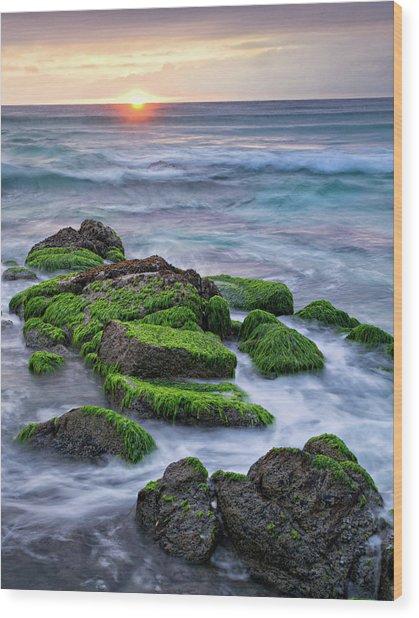 Seaweed, Granite And Blue Water Wood Print by Peter G Knott