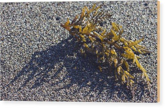 Seaweed Shadow Wood Print