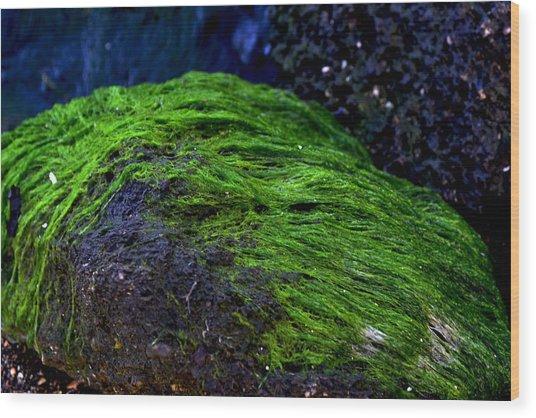 Seaweed Wood Print by Victoria Clark