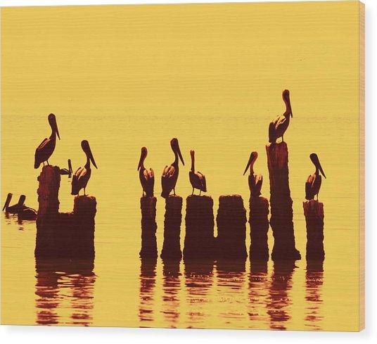 Secret Life Of Pelicans Wood Print