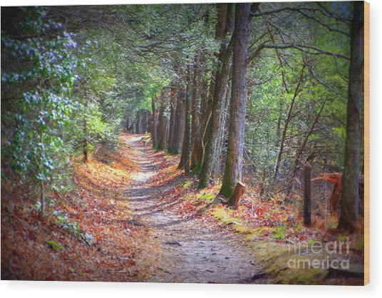 Secret Pathway 1 Wood Print
