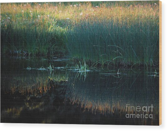 Sedges At Sunset Wood Print