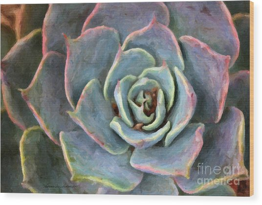 Sedum With Pink Edges Wood Print