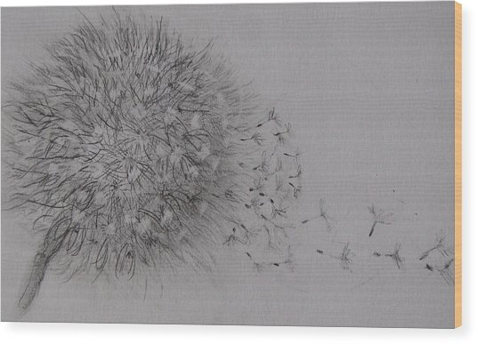 Seedhead Wood Print by Anne Parker