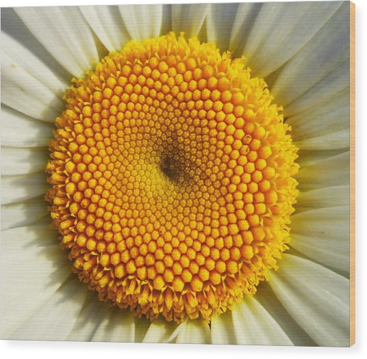 Seeds Of Love Wood Print