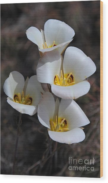 Sego Lily Wood Print