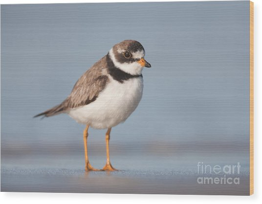 Semipalmated Plover Wood Print